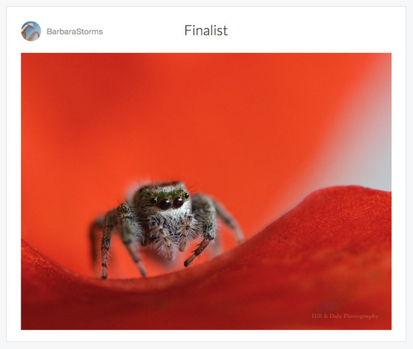 """The Little Jumping Spider"""